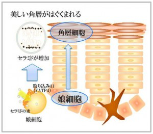 active-fatp4